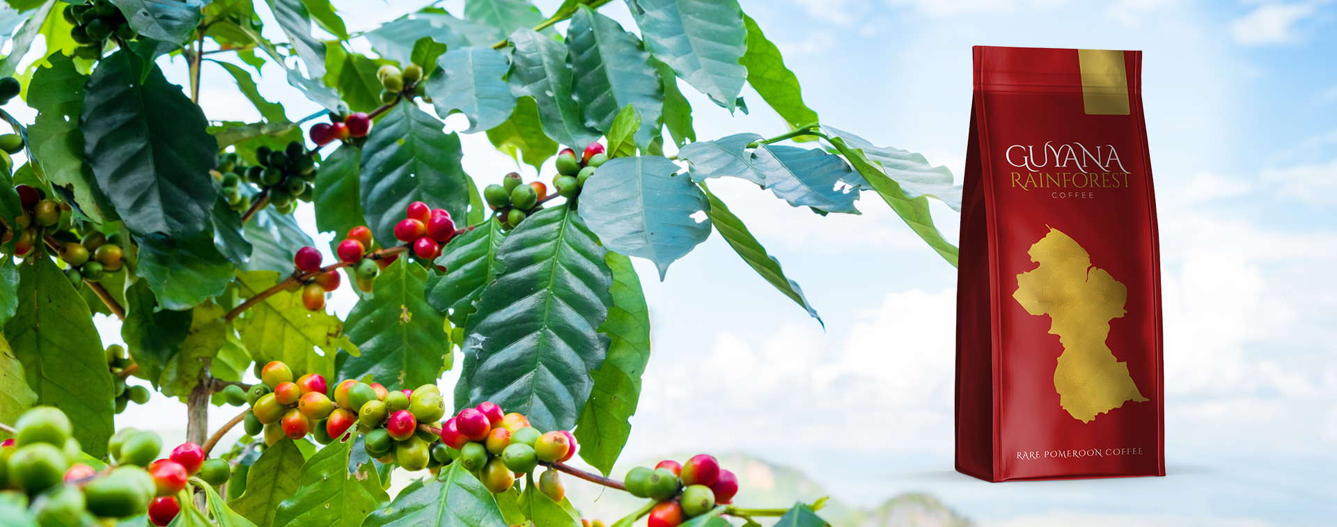 Guyana Rainforest Coffee